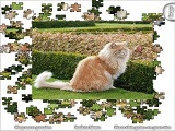 Hra - Jigsaw Lion Cat