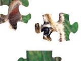 Hra - Tiger Puzzle