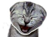 Hra - Vysmátá kočka